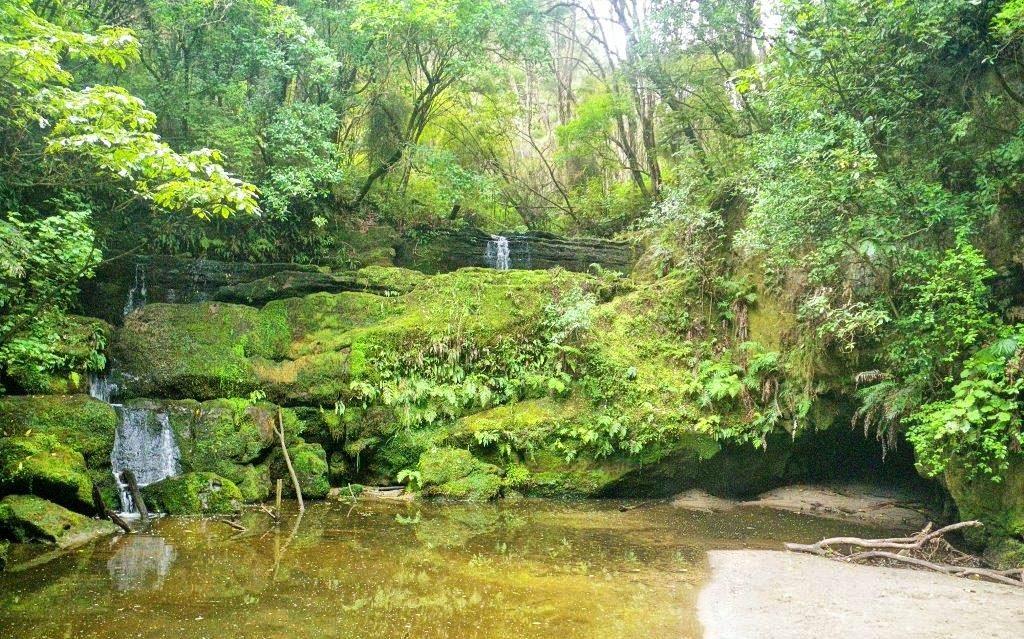 Gisborne-Walks-Waiherere-Domain